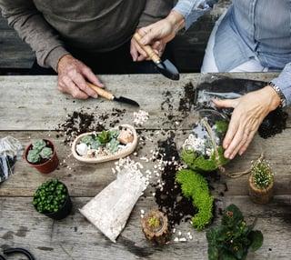 Gardening Hobby